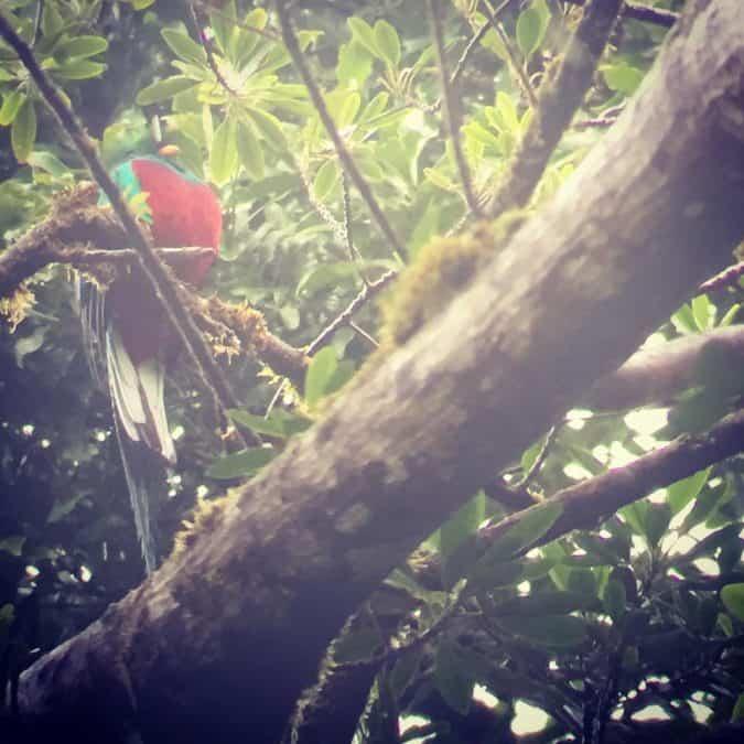 bird watching what to do in monteverde