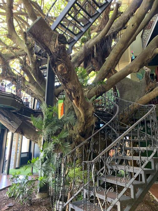 treehouse restaurant things to do in monteverde costa tica