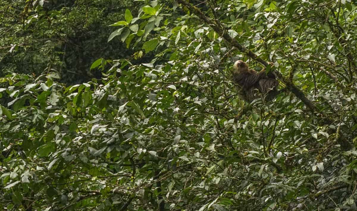 a sloth in la fortuna costa rica, wildlife spotting is one of the best things to do