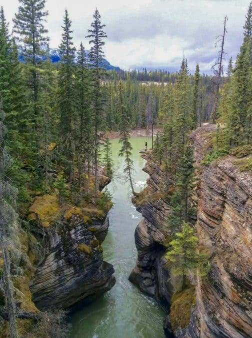jasper national park athabasca falls