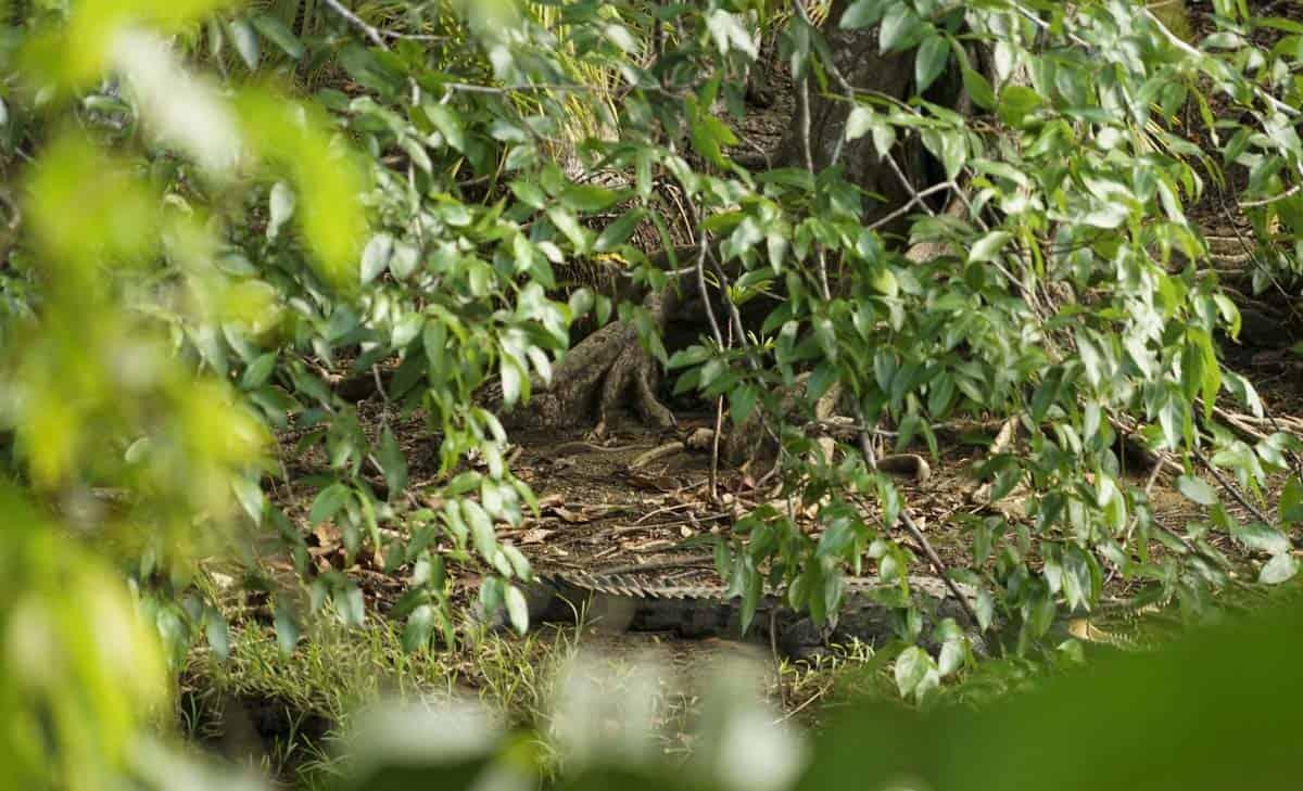 mangrove kayaking sierpe