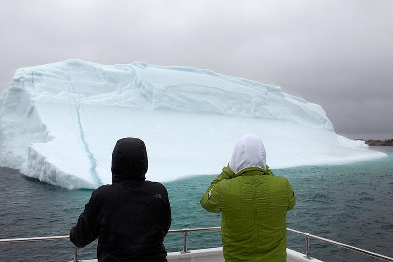 icebergs newfoundland