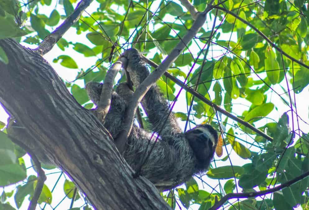 sloth island things to do bocas del toro