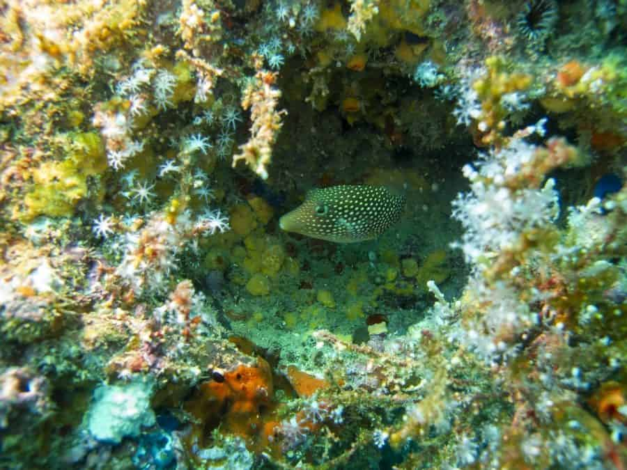 fish while diving in uvita