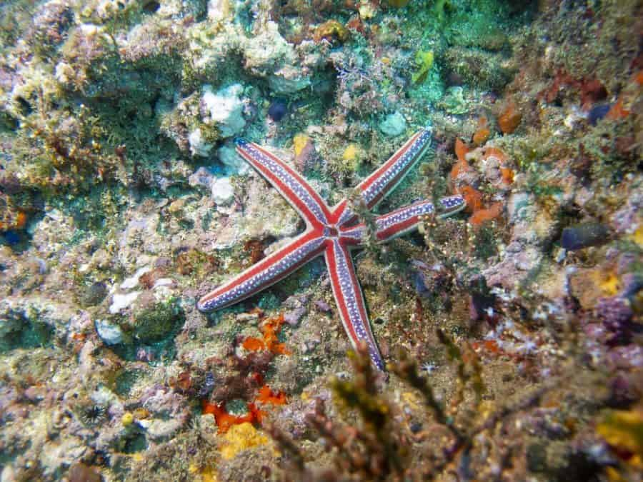star fish diving in uvita