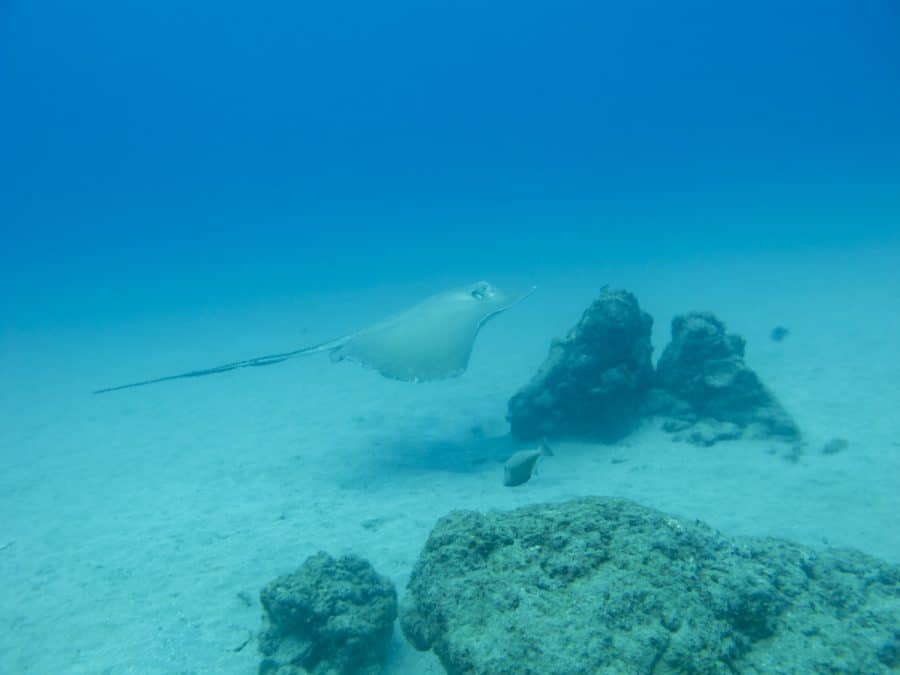 sting ray cano island diving