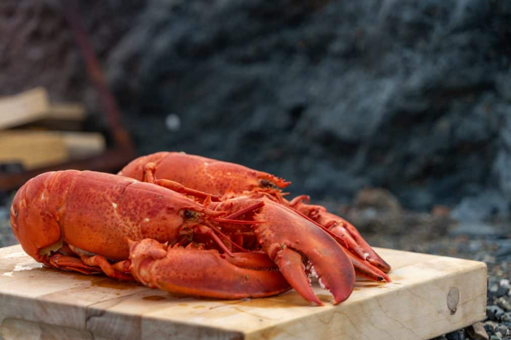lobster in newfoundland