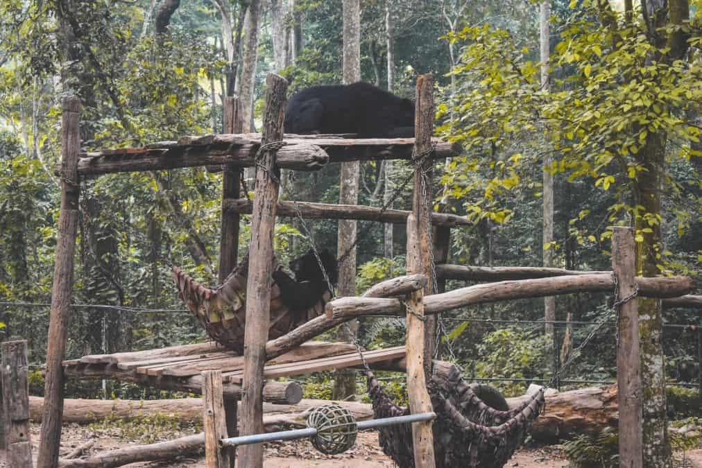 bears in laos