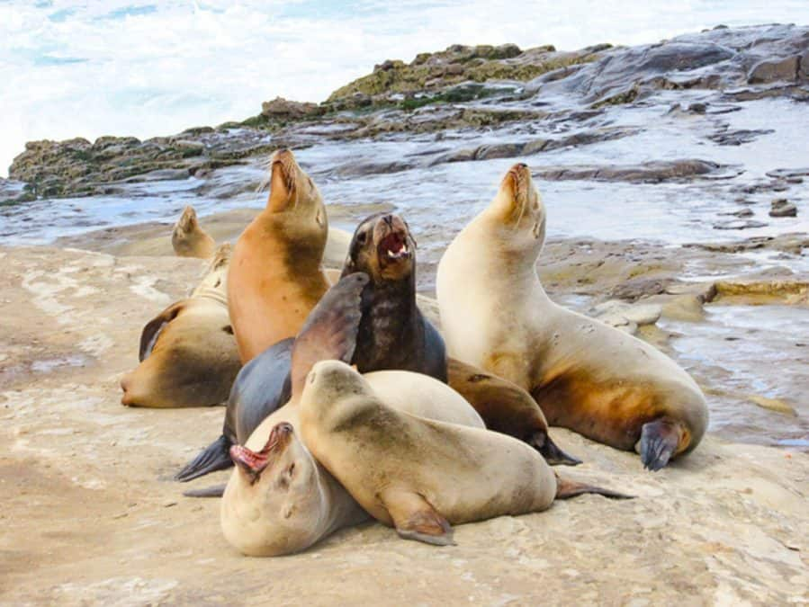 sea lions in san diego best wildlife experiences in the world
