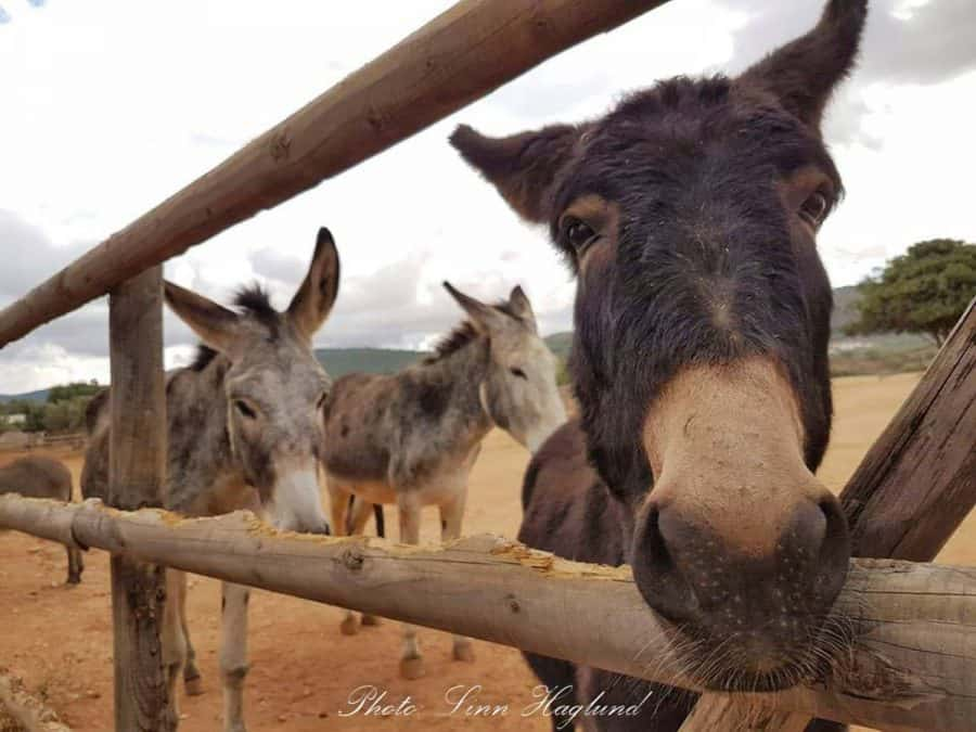 donkeys in spain