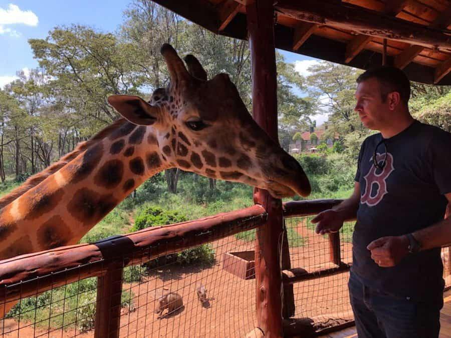 giraffes in nairobi