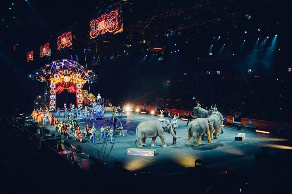 animals performing at a circus show