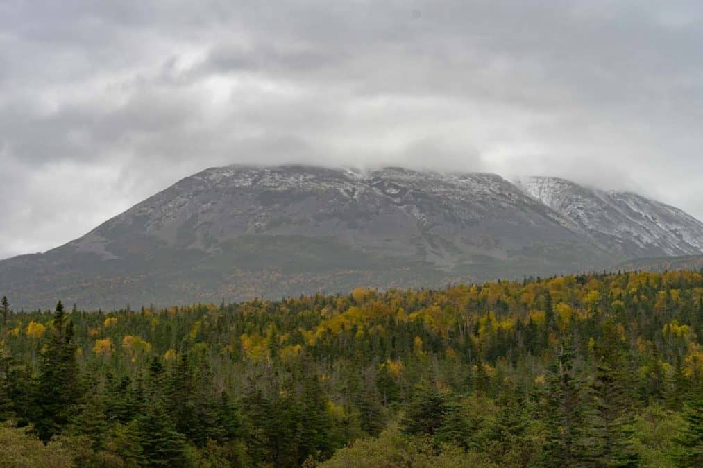 fall colors in gros morne national park