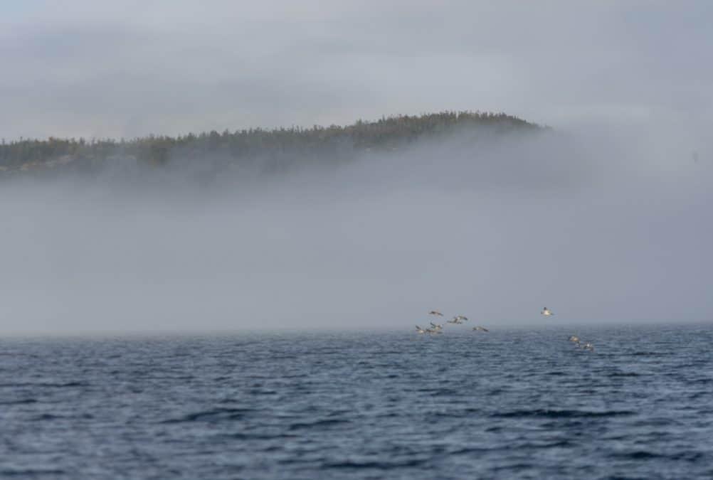Sea birds in Trinity, Newfoundland