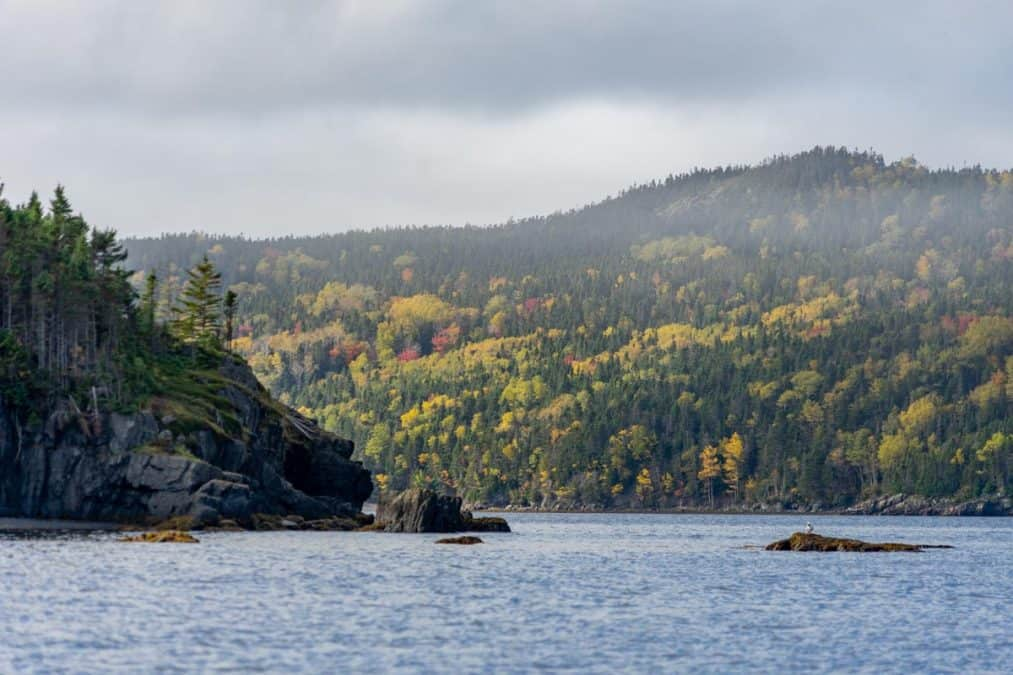 fall colors in Newfoundland
