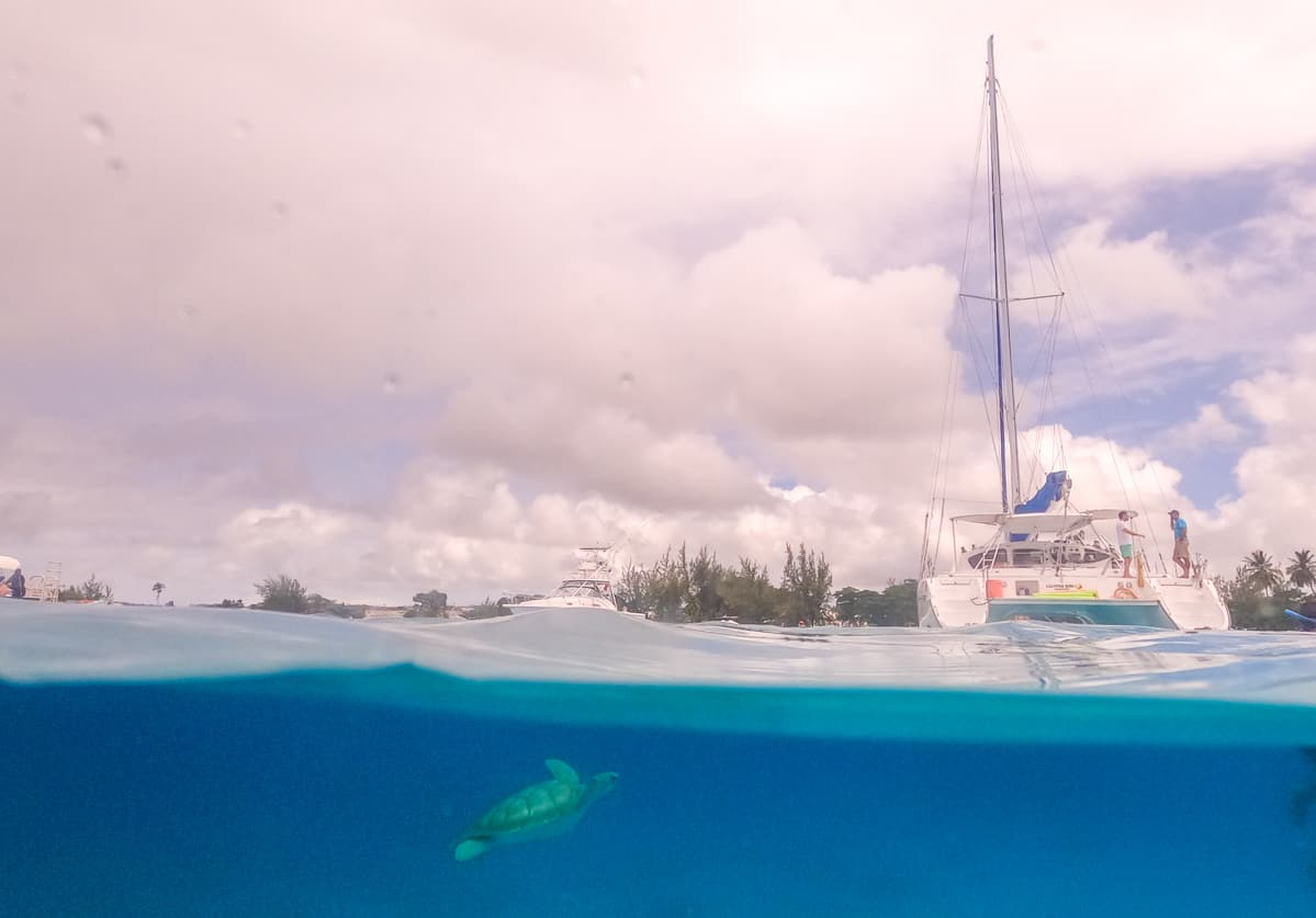 Snorkeling with sea turtles on a catamaran tour in Barbados in Carlisle Bay