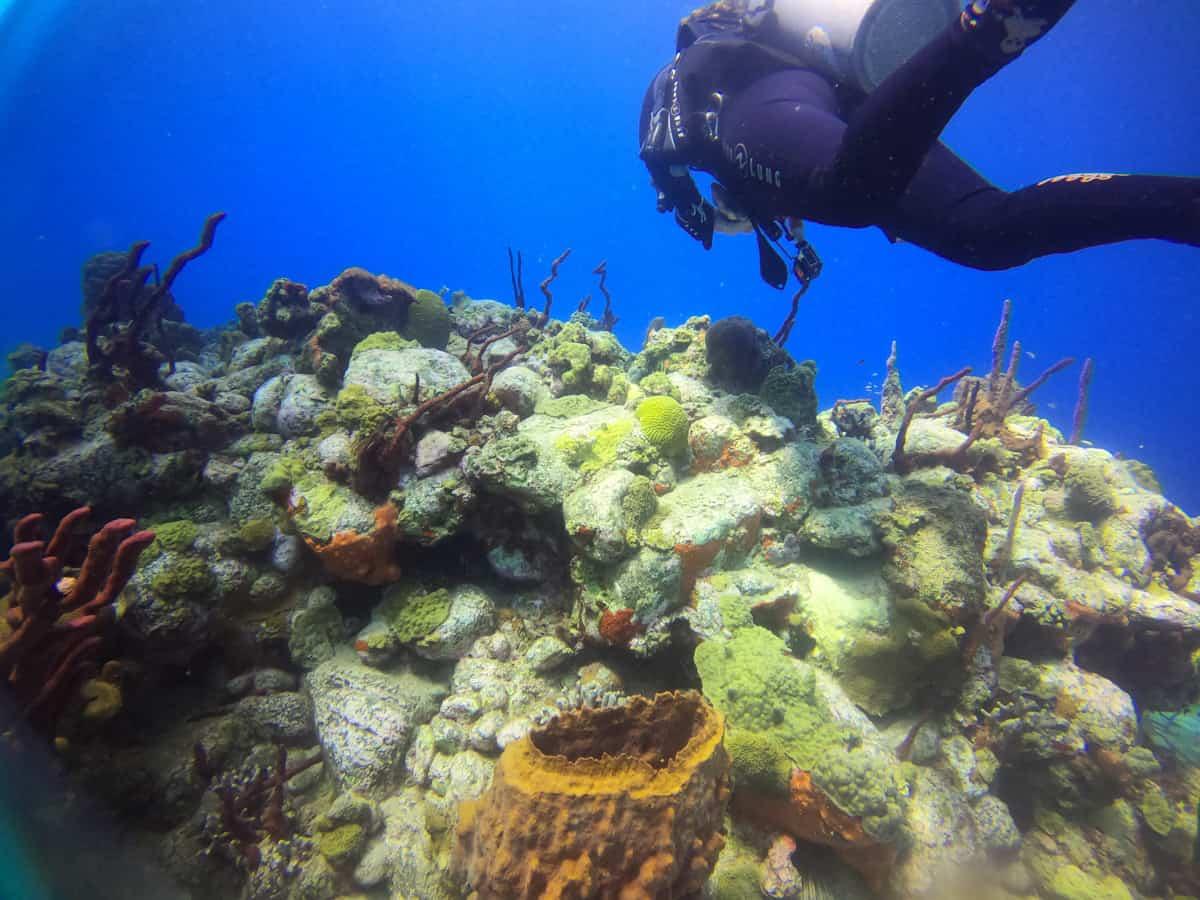 diving in dominiva