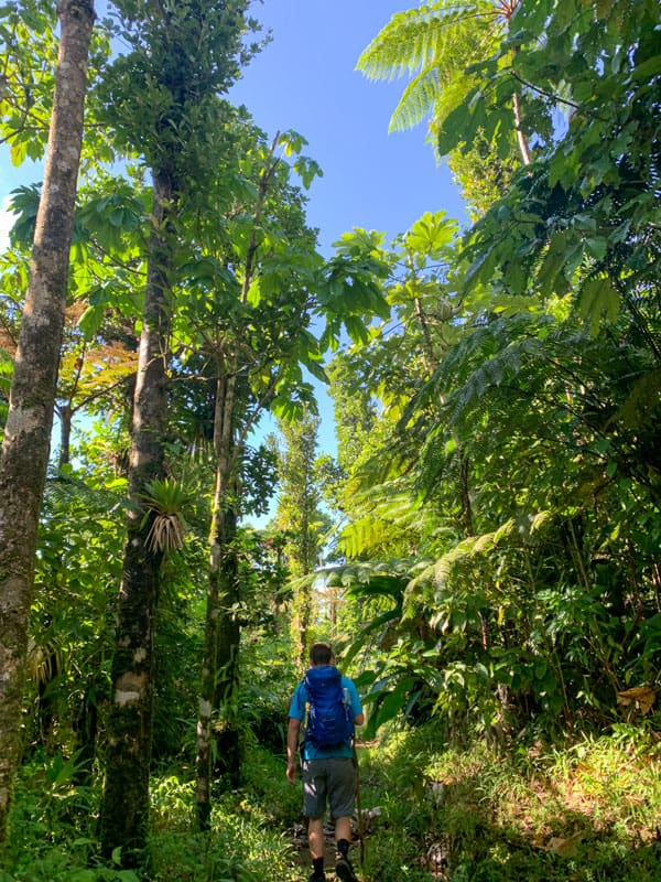 hiking through a rainforest in dominica