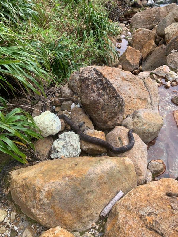 boa constrictor boiling lake dominica