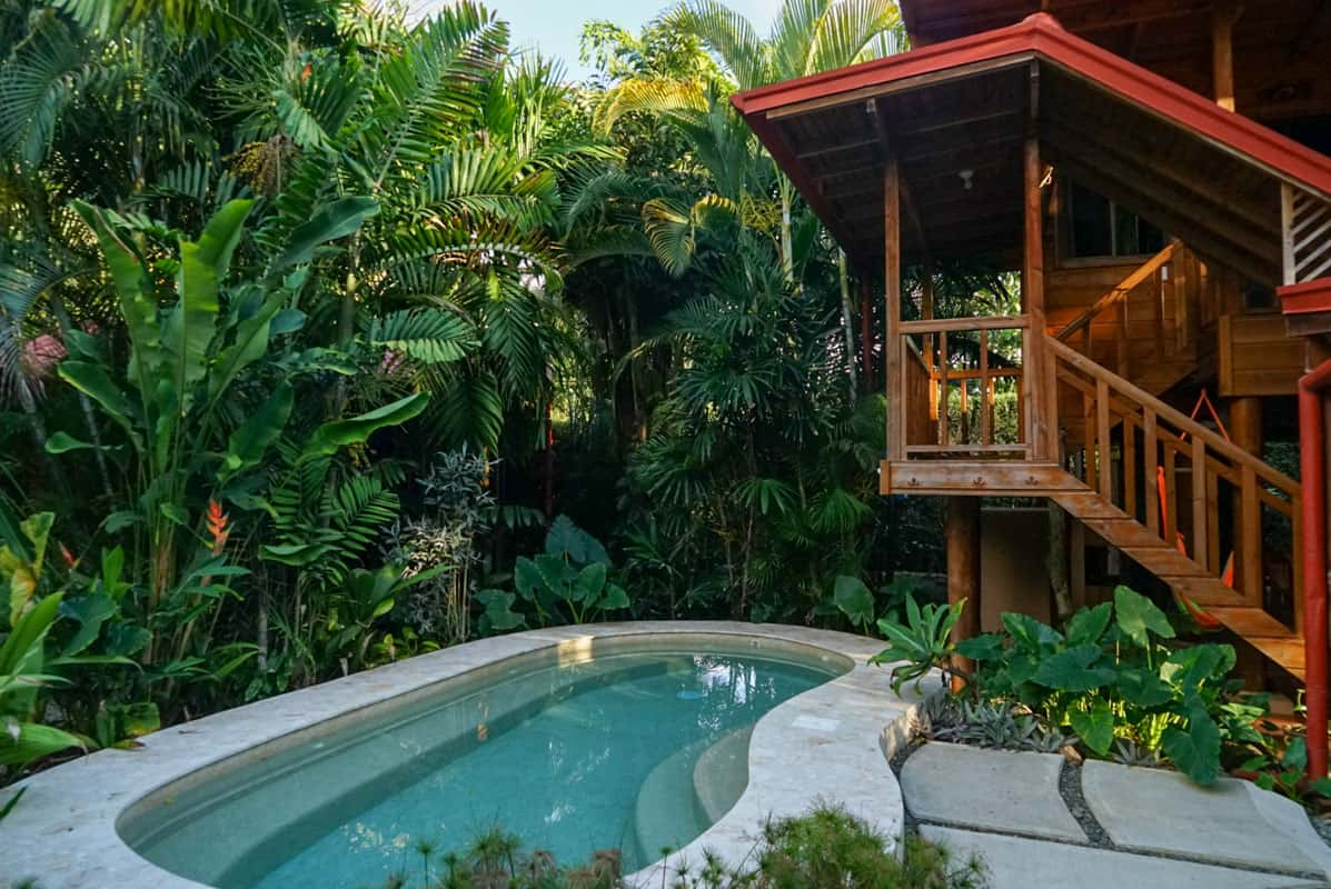outdoor pool surrounded by plants