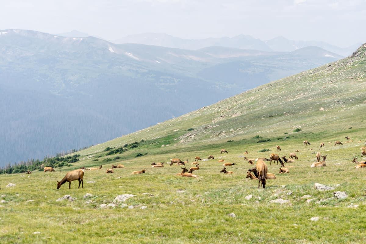rocky mountain national park colorado road trip itinerary
